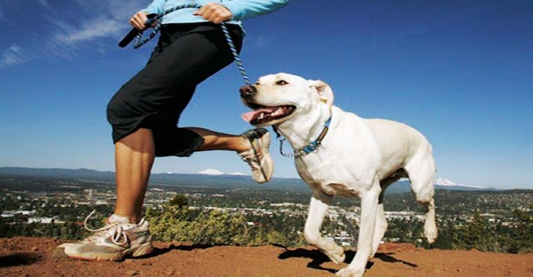 Dicas para praticar esportes com cães