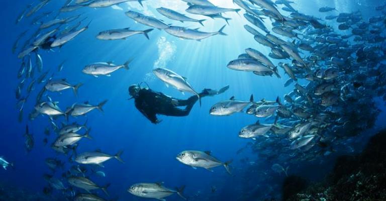 As cinco maiores ameaças humanas aos oceanos