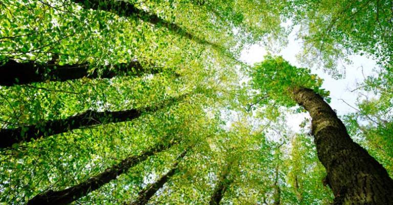 Produtores rurais vão receber por florestas conservadas na Amazônia