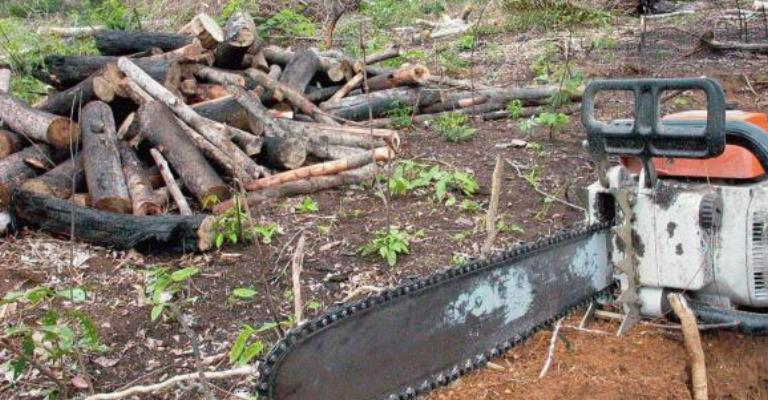 Governo autoriza uso das Forças Armadas no combate ao desmatamento