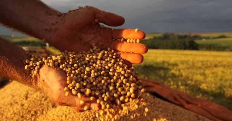 Exportações do setor agropecuário registram aumento de 17,5% em 2020