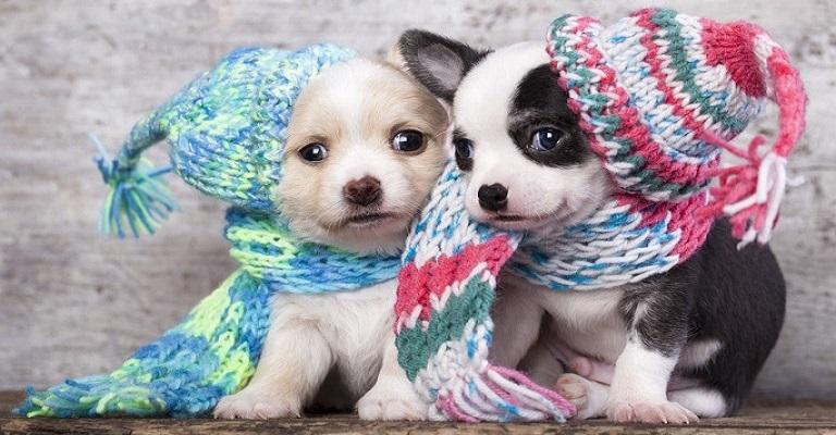 Como proteger seu pet do frio?