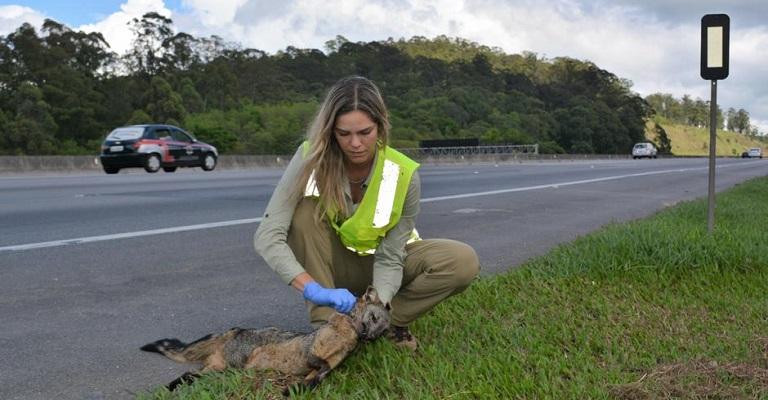 Um prêmio para a proteção de animais em estradas brasileiras