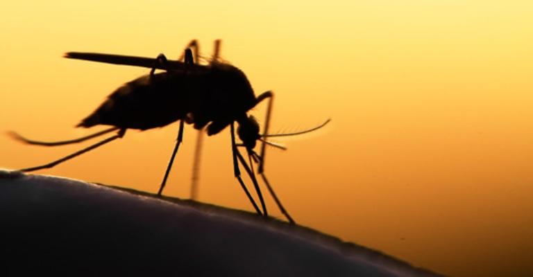 Casos de malária no Brasil têm queda de 38% em 2019
