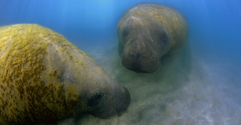 Guia ensina a identificar mamíferos aquáticos do Brasil