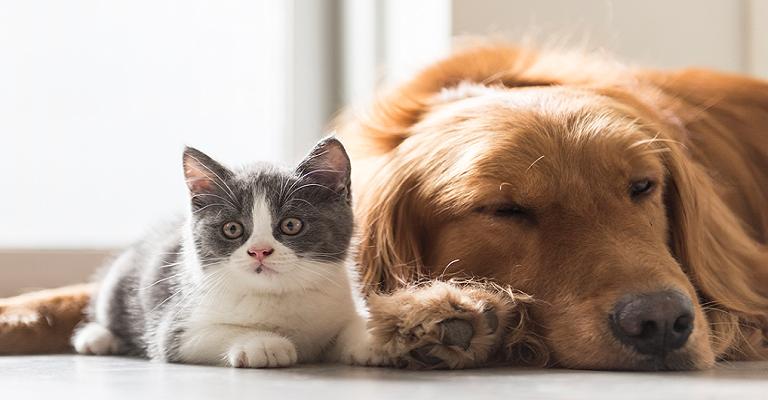 Outubro Rosa: câncer de mama também afeta cães e gatos