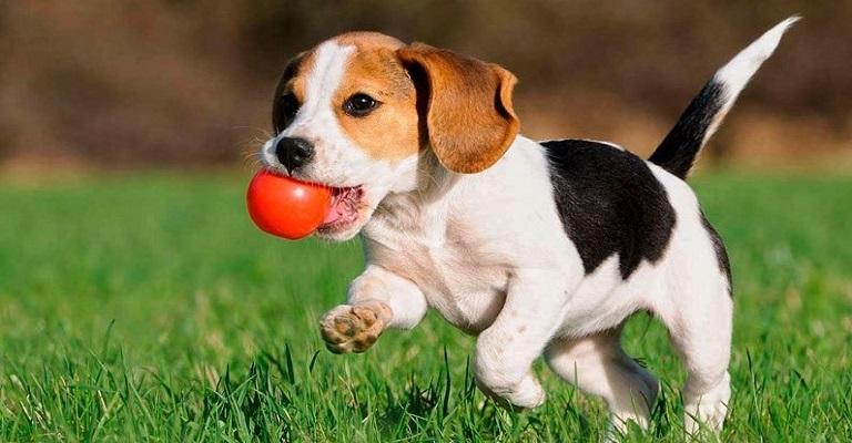 Planos de saúde para pets, vale a pena ter um?