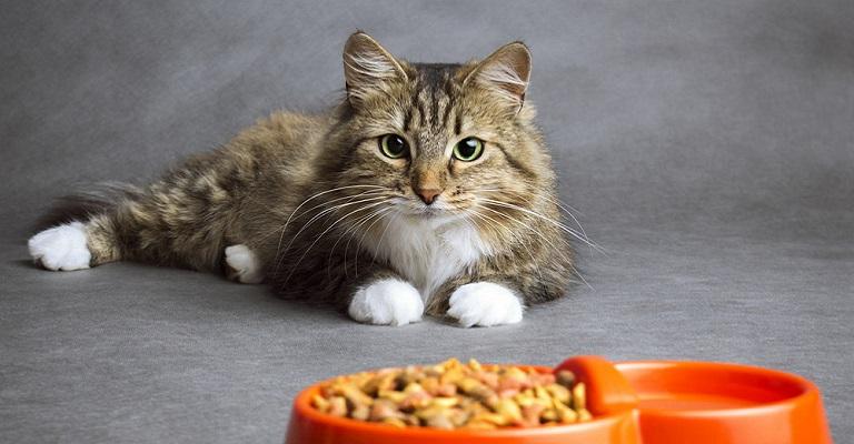 10 curiosidades que você provavelmente não sabe sobre os gatos