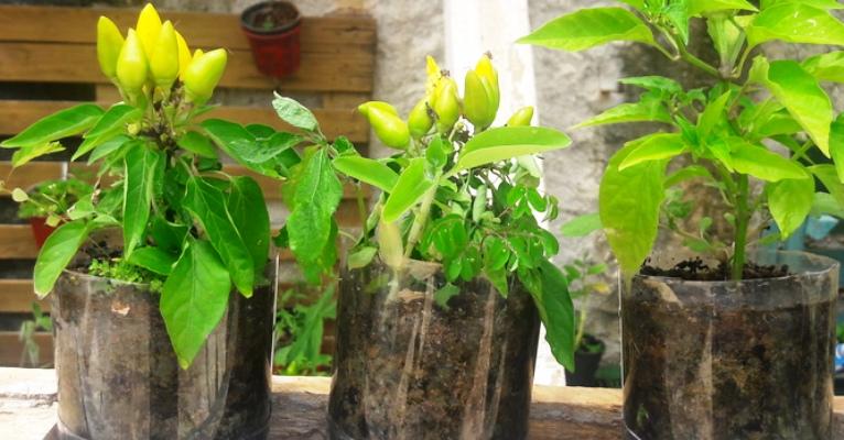 Quase 40% das plantas estão ameaçadas de extinção, mostra pesquisa