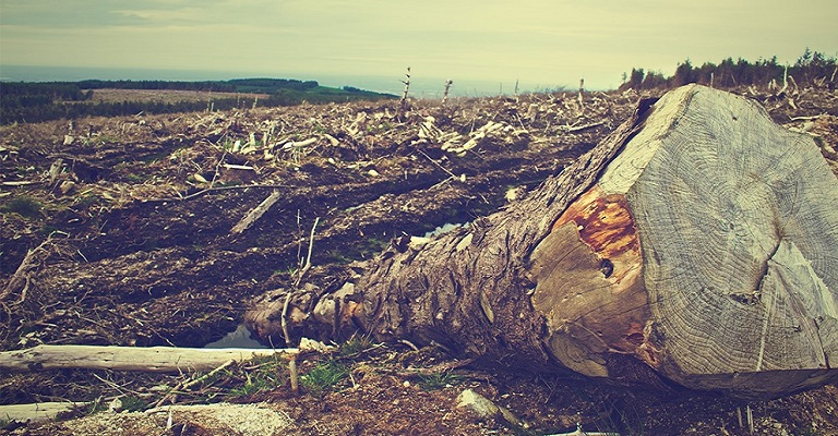 AGU assegura bloqueio de R$1 milhão em bens de infrator ambiental