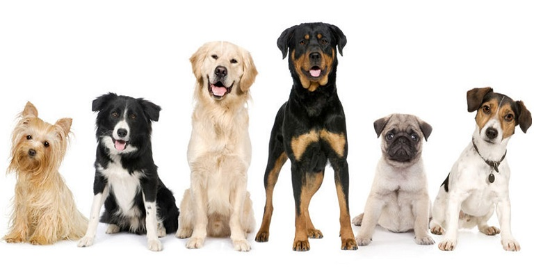 As raças de cães mais populares em 2019 no Brasil