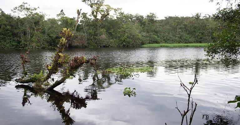 A biodiversidade também deve ser tratada como um tema econômico