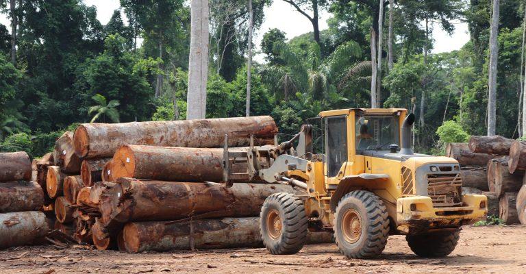 Abril registra recorde de desmatamento na Amazônia nos últimos dez anos