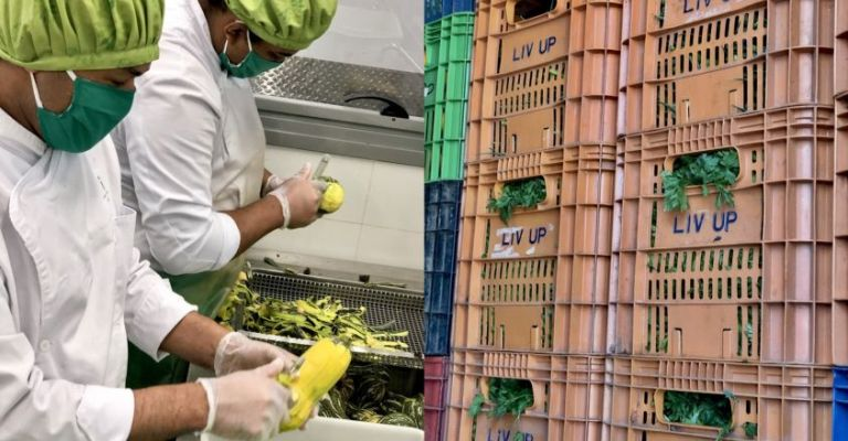 Startup doará pelo menos uma tonelada de orgânicos por semana para ONGs