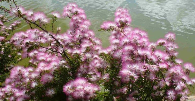 Flores mais indicadas para cultivo na primavera