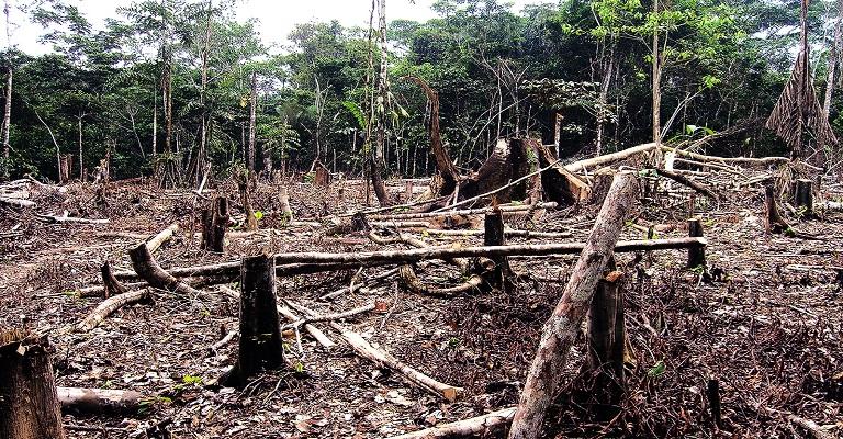A falta de preservação ambiental e suas consequências