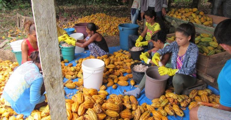 Amazônia: conservação em movimento