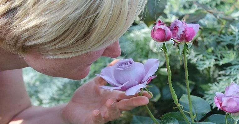 O perfume vem depois da flor