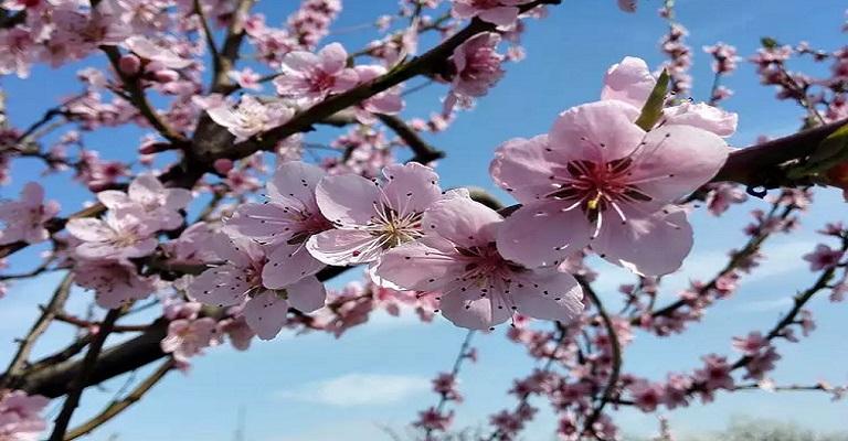 Primavera e o impacto na vida!