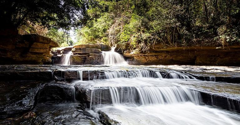 Solução para crises hídricas está na natureza