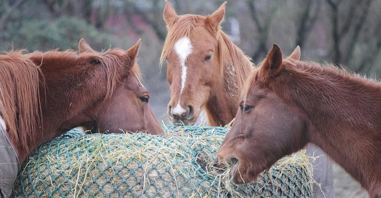 Como evitar que as micotoxinas interfiram na saúde e no desenvolvimento do seu cavalo