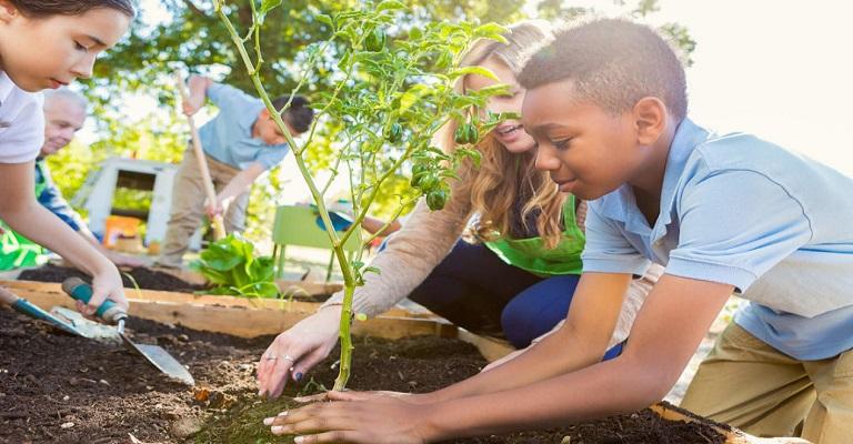 Educação ambiental: os esforços começam na sala de aula