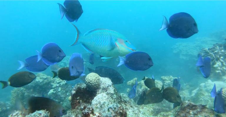 Série mostra diversidade marinha da região de Abrolhos, na Bahia