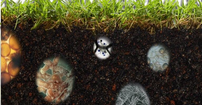 Microrganismos: heróis das plantas contra pragas e doenças