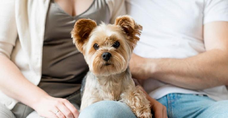 Saiba quais são os Direitos dos pets em caso de separação do casal