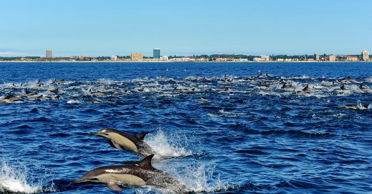 Baía de Algoa, na África do Sul, recebe título de Patrimônio das Baleias