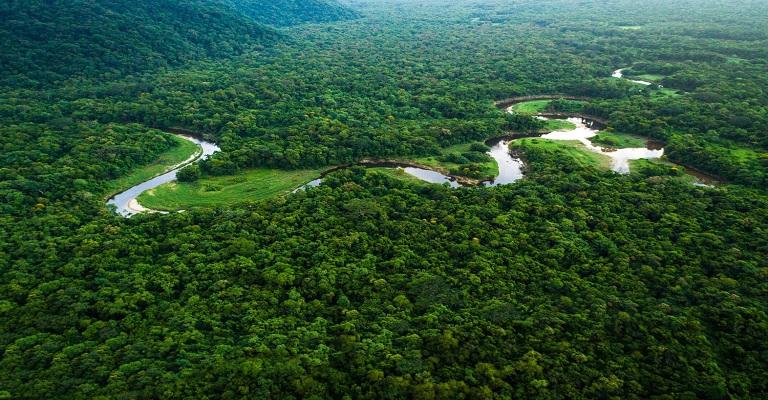 """Sérgio Bringel: """"preservar a Amazônia é cuidar do futuro de todos"""""""