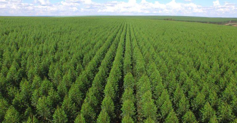 Florestas plantadas no Brasil somam 9,3 milhões de hectares em 2020